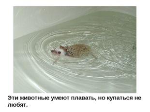 Эти животные умеют плавать, но купаться не любят.