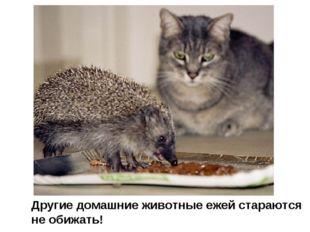 Другие домашние животные ежей стараются не обижать!