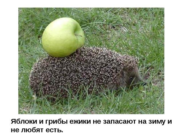 Яблоки и грибы ежики не запасают на зиму и не любят есть.