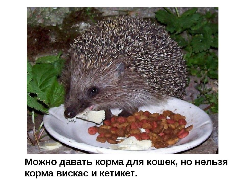 Можно давать корма для кошек, но нельзя корма вискас и кетикет.