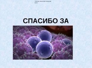 СПАСИБО ЗА ВНИМАНИЕ! Учитель биологии Ачкасова Ю.М.