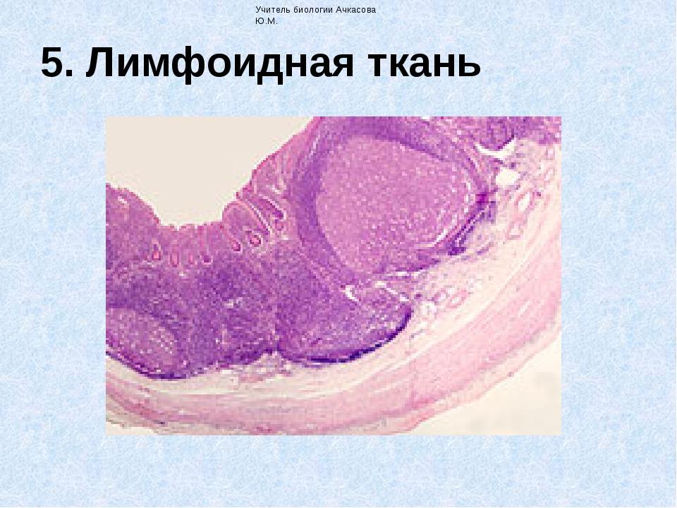 5. Лимфоидная ткань Учитель биологии Ачкасова Ю.М. комплекслимфоцитовимак...