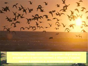 Некоторые птицы ежегодно совершают перелеты от родных мест к местам зимовок и