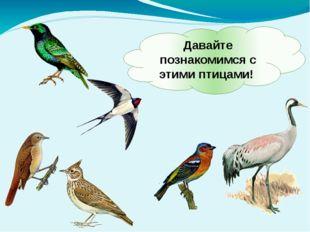 Давайте познакомимся с этими птицами!
