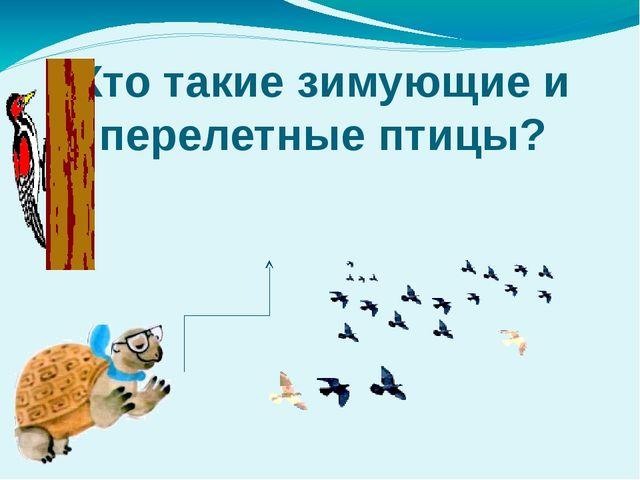 Кто такие зимующие и перелетные птицы?