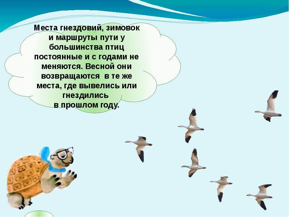 Места гнездовий, зимовок и маршруты пути у большинства птиц постоянные и с го...