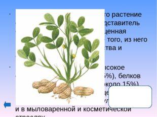 Плоды этого растения любят все: от мала до велика и считают их за лакомство.