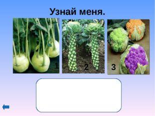 Аукцион – 30 баллов, кто больше? История этого растения в России началась в 1