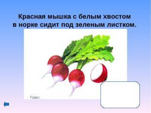 Интернет-ресурсы http://www.inmoment.ru/beauty/health-body/eggplant http://um