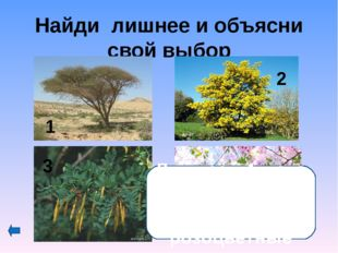 Как называются соцветия семейства зонтичных? 1-сложный или простой зонтик; 2-