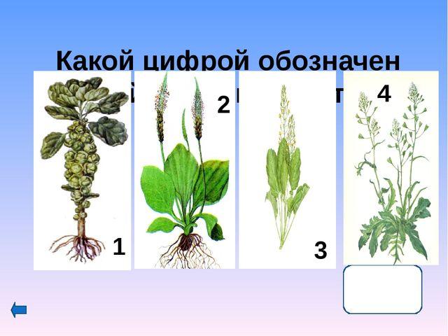 КоролеваФранции Мария Медичи это растение употребляла при своих нередких де...