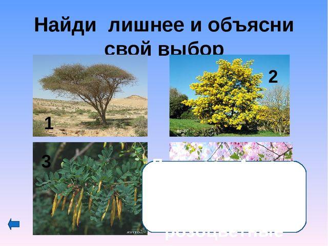 Как называются соцветия семейства зонтичных? 1-сложный или простой зонтик; 2-...