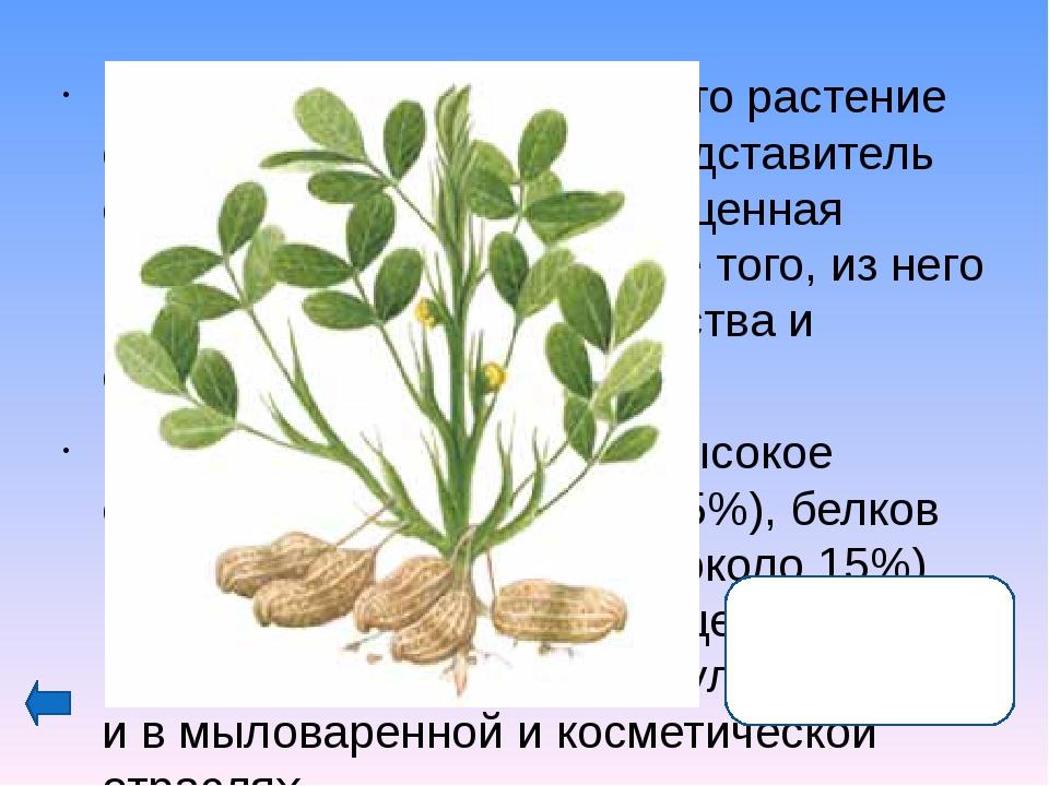 Плоды этого растения любят все: от мала до велика и считают их за лакомство....