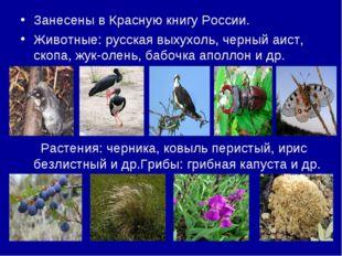 Занесены в Красную книгу России. Животные: русская выхухоль, черный аист, ско