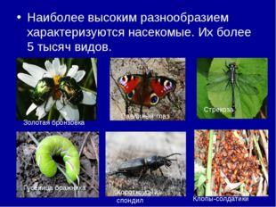Наиболее высоким разнообразием характеризуются насекомые. Их более 5 тысяч ви