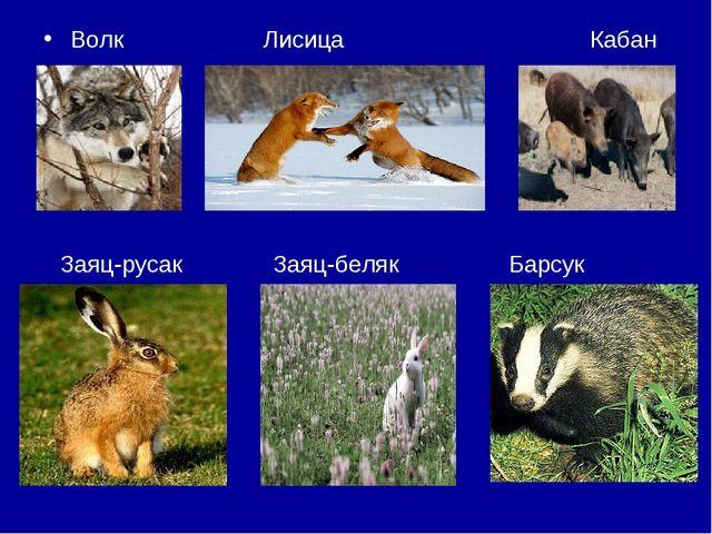 Волк Лисица Кабан Заяц-русак Заяц-беляк Барсук
