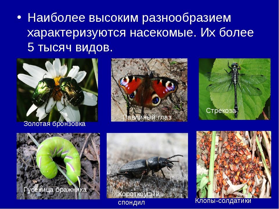 Наиболее высоким разнообразием характеризуются насекомые. Их более 5 тысяч ви...