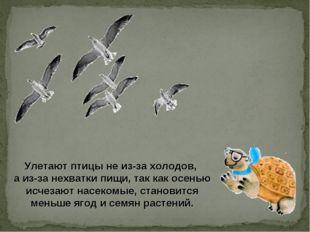 Улетают птицы не из-за холодов, а из-за нехватки пищи, так как осенью исчеза