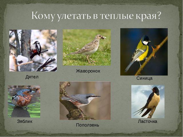 Дятел Зяблик Синица Ласточка Жаворонок Поползень