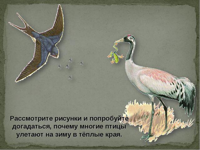 Рассмотрите рисунки и попробуйте догадаться, почему многие птицы улетают на...