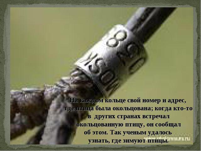 Накаждом кольце свой номер иадрес, где птица была окольцована; когда кто-то...