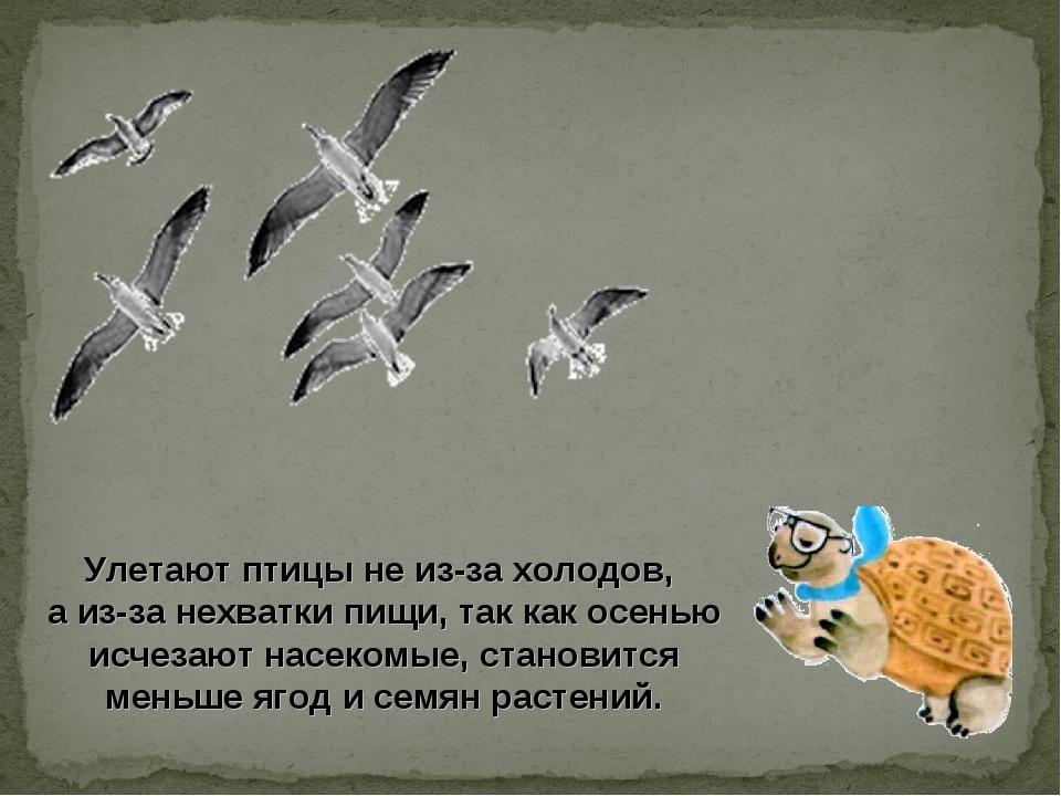 Улетают птицы не из-за холодов, а из-за нехватки пищи, так как осенью исчеза...