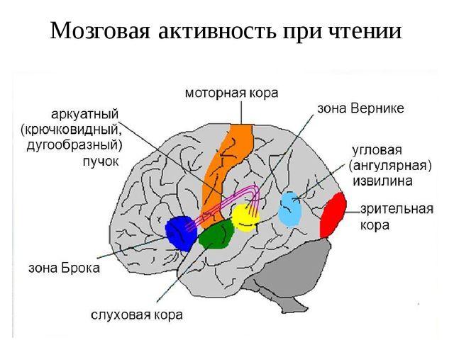 Мозговая активность при чтении
