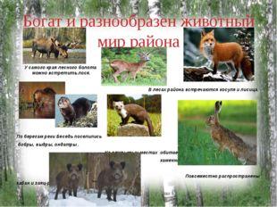 Богат и разнообразен животный мир района У самого края лесного болота можно в