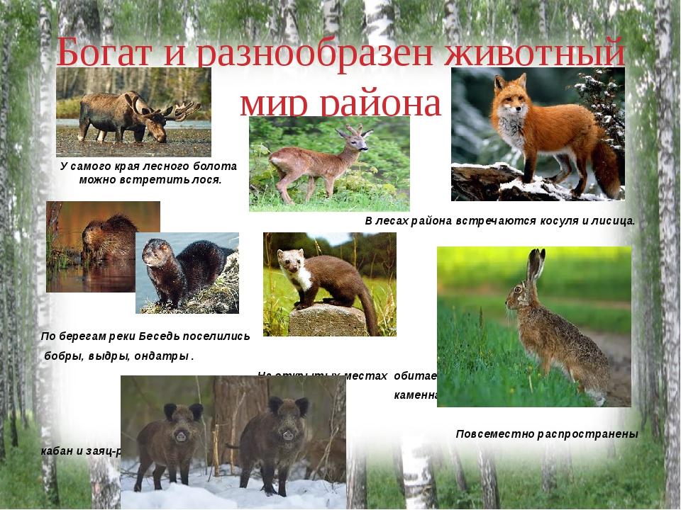 Богат и разнообразен животный мир района У самого края лесного болота можно в...