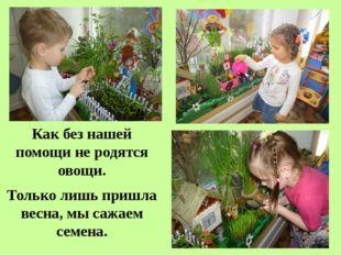 Как без нашей помощи не родятся овощи. Только лишь пришла весна, мы сажаем се