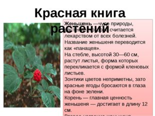 Женьшень —чудо природы, растение, которое считается лекарством от всех болезн