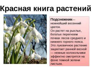 Подснежник— нежнейший весенний цветок. Он растет на рыхлых, богатых перегноем
