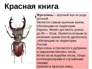 Красная книга животных Жук-олень— крупный жук из рода рогачей. Является самым