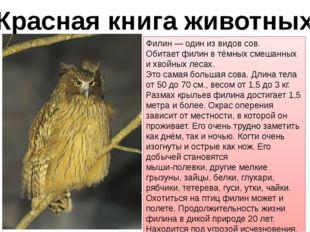 Красная книга животных Филин — один из видов сов. Обитает филин в тёмных смеш