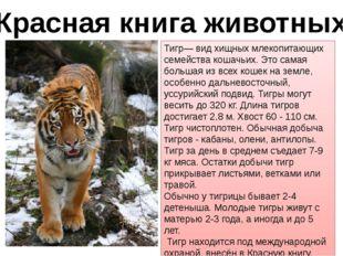 Красная книга животных Тигр— вид хищных млекопитающих семейства кошачьих. Это