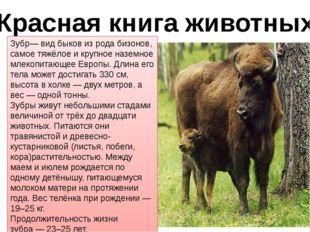 Красная книга животных Зубр— вид быков из рода бизонов, самое тяжёлое и крупн