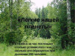 «Лёгкие нашей планеты» 1 га леса за час поглощает столько углекислого газа, с