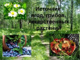 Источник ягод, грибов, лекарственных растений