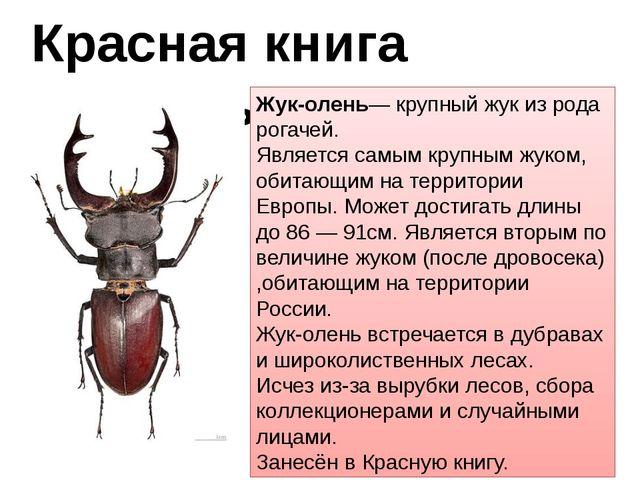 Красная книга животных Жук-олень— крупный жук из рода рогачей. Является самым...