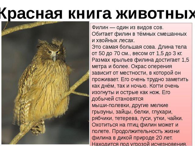 Красная книга животных Филин — один из видов сов. Обитает филин в тёмных смеш...