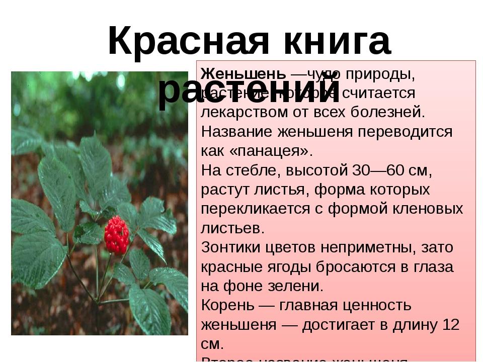 Женьшень —чудо природы, растение, которое считается лекарством от всех болезн...