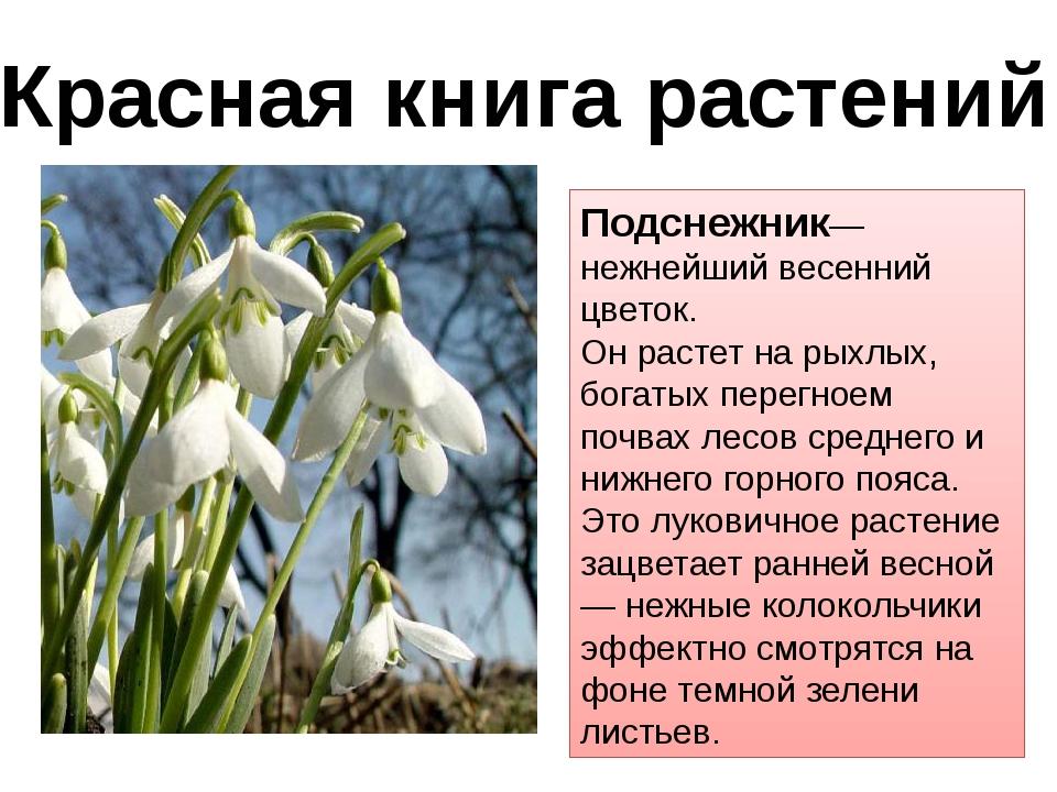 Подснежник— нежнейший весенний цветок. Он растет на рыхлых, богатых перегноем...