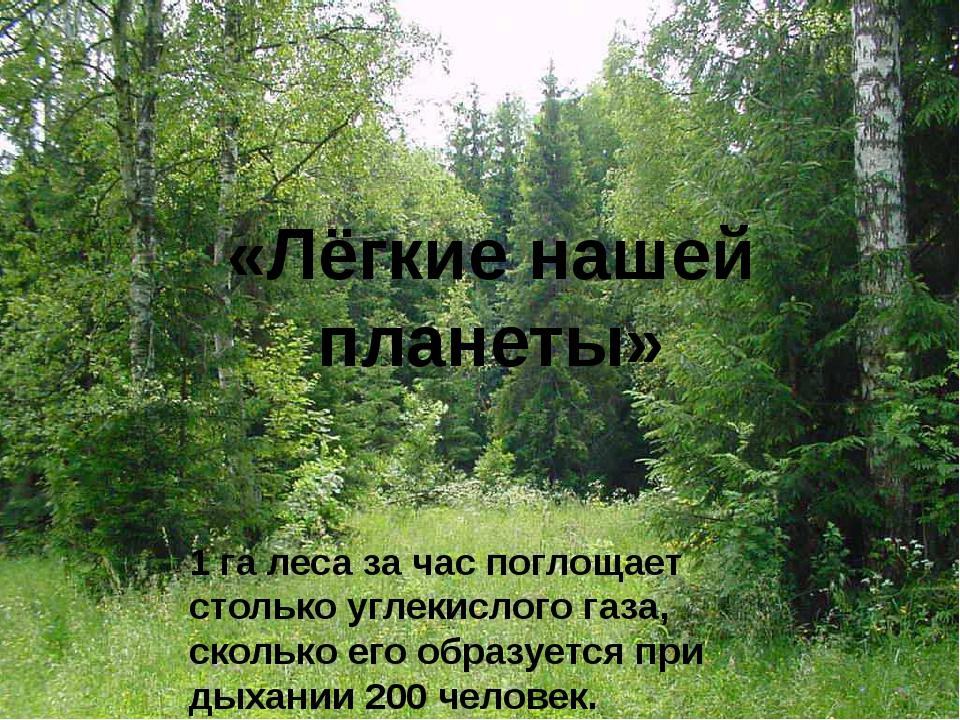 «Лёгкие нашей планеты» 1 га леса за час поглощает столько углекислого газа, с...