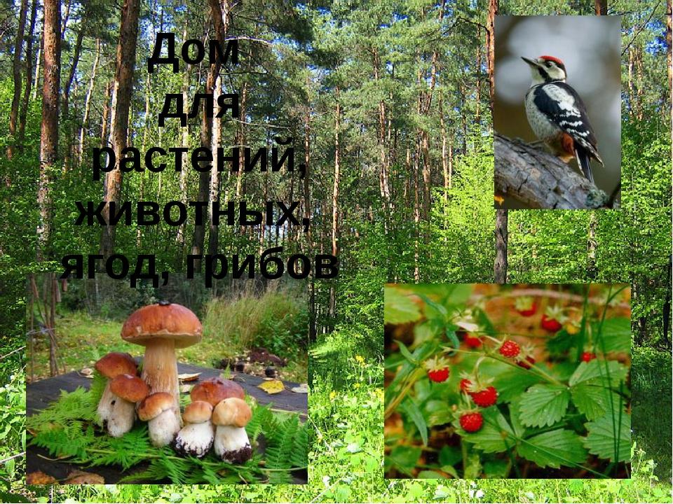 Дом для растений, животных, ягод, грибов