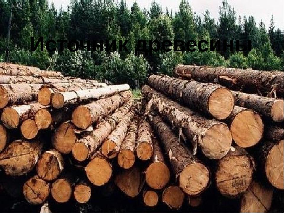 Источник древесины