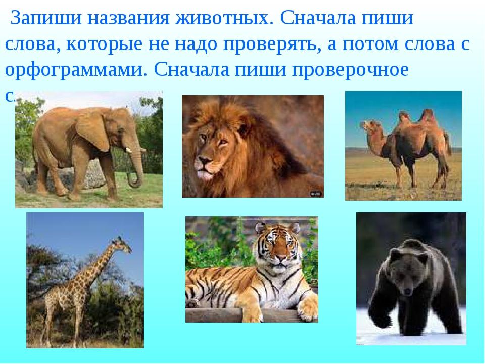 Запиши названия животных. Сначала пиши слова, которые не надо проверять, а п...