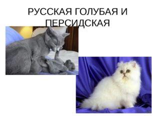 РУССКАЯ ГОЛУБАЯ И ПЕРСИДСКАЯ