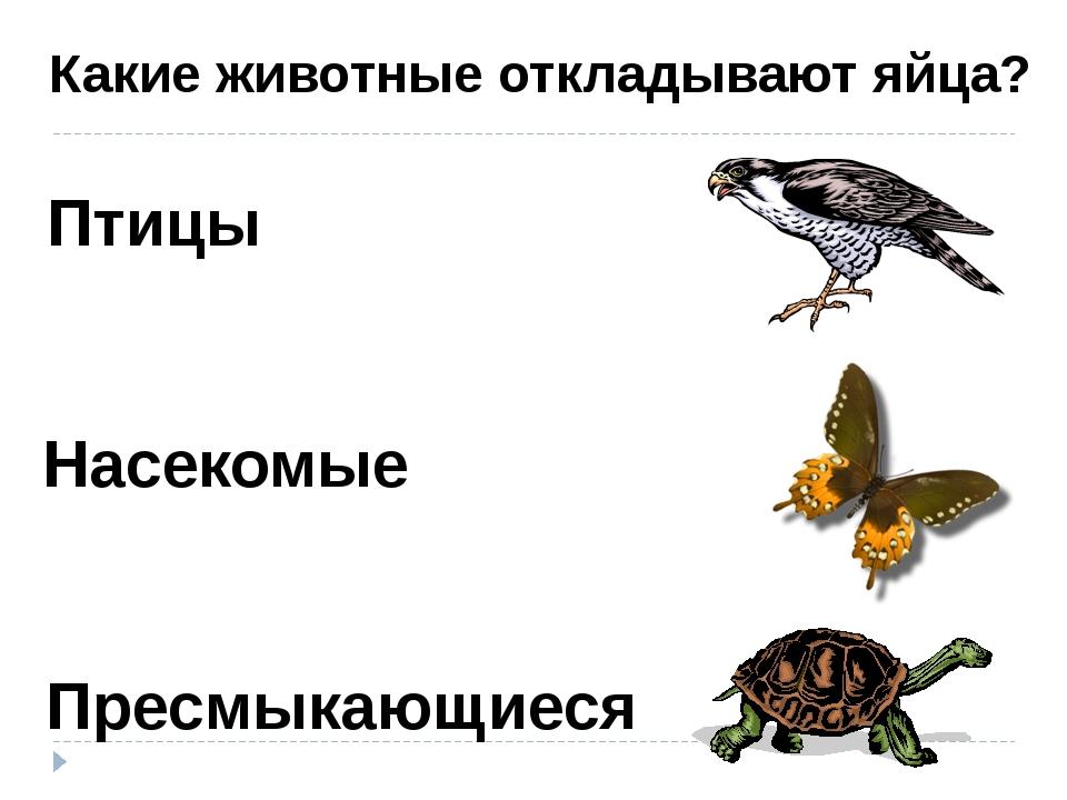 Птицы Насекомые Пресмыкающиеся Какие животные откладывают яйца?