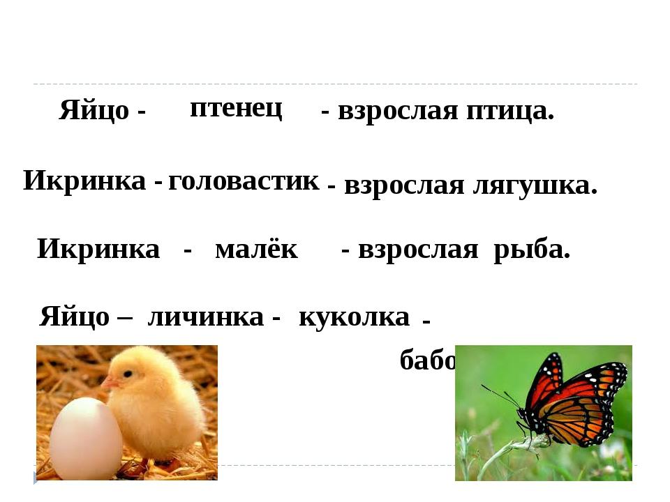 Яйцо - - взрослая птица. птенец Икринка - - взрослая лягушка. головастик - ба...