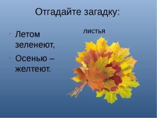 Отгадайте загадку: Летом зеленеют, Осенью – желтеют. листья